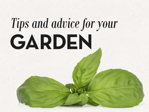 10+ great tips for your garden