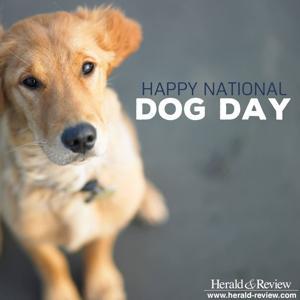 Photos: Beloved dogs of Decatur