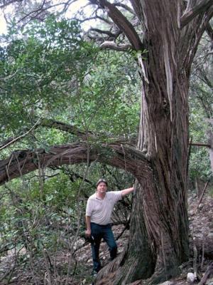 Big Trees: Ashe juniper