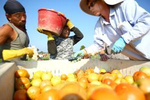 BIG FARM YIELD but a dwindling workforce