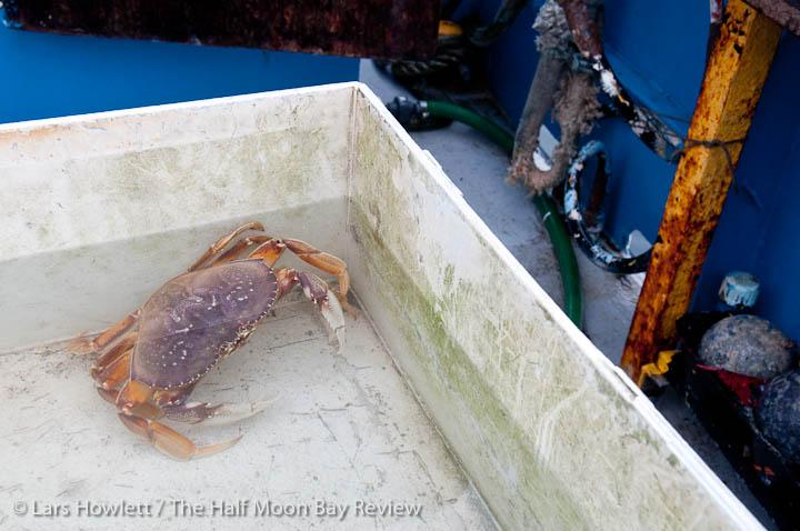 California closes recreational crab season local news for Crab fishing game