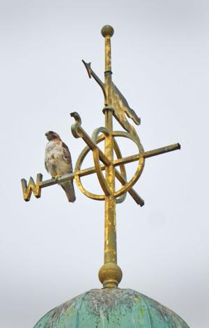 A Birds' eye view