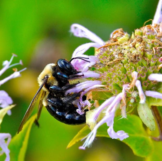 Madison considers allowing bee hives in employment districts