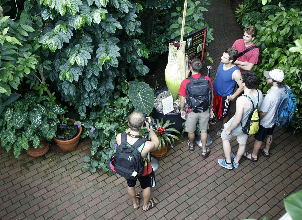 s Corpse Flower at Olbrich Gardens Local News