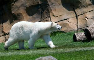 Photos: Arctic Passage exhibit opens at Henry Vilas Zoo