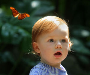 Photos: Butterflies bring color, life to Olbrich