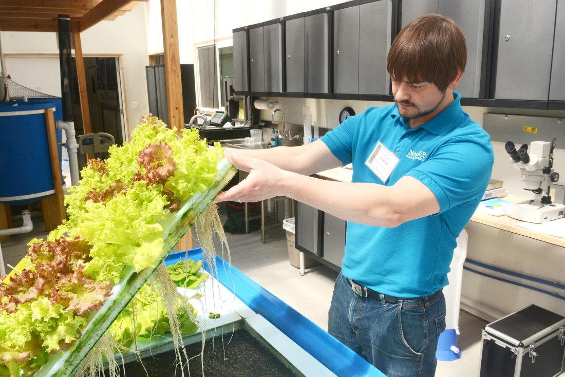 uw stevens point opens aquaponics center in montello local news aquaponics curtin
