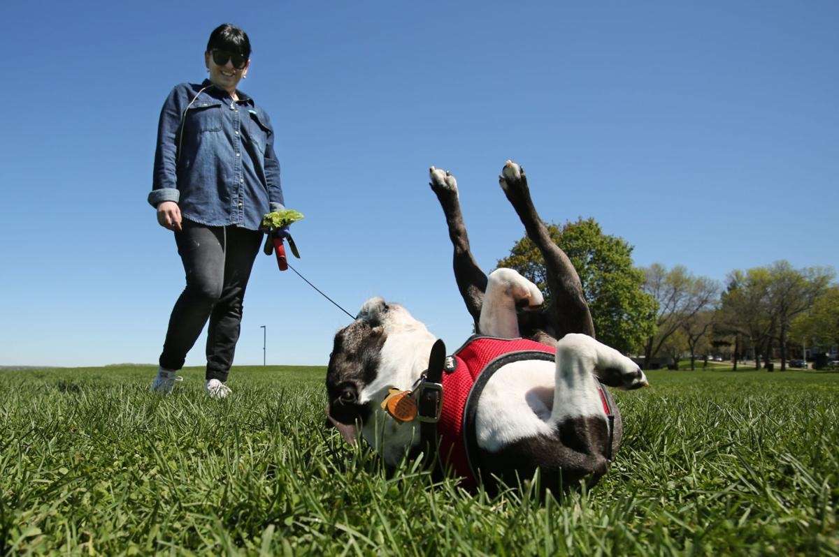 Madison Wi Parks That Allow Dogs