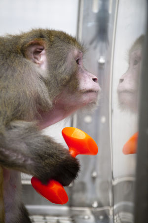 UW primate research plans prompt renewed County Board opposition