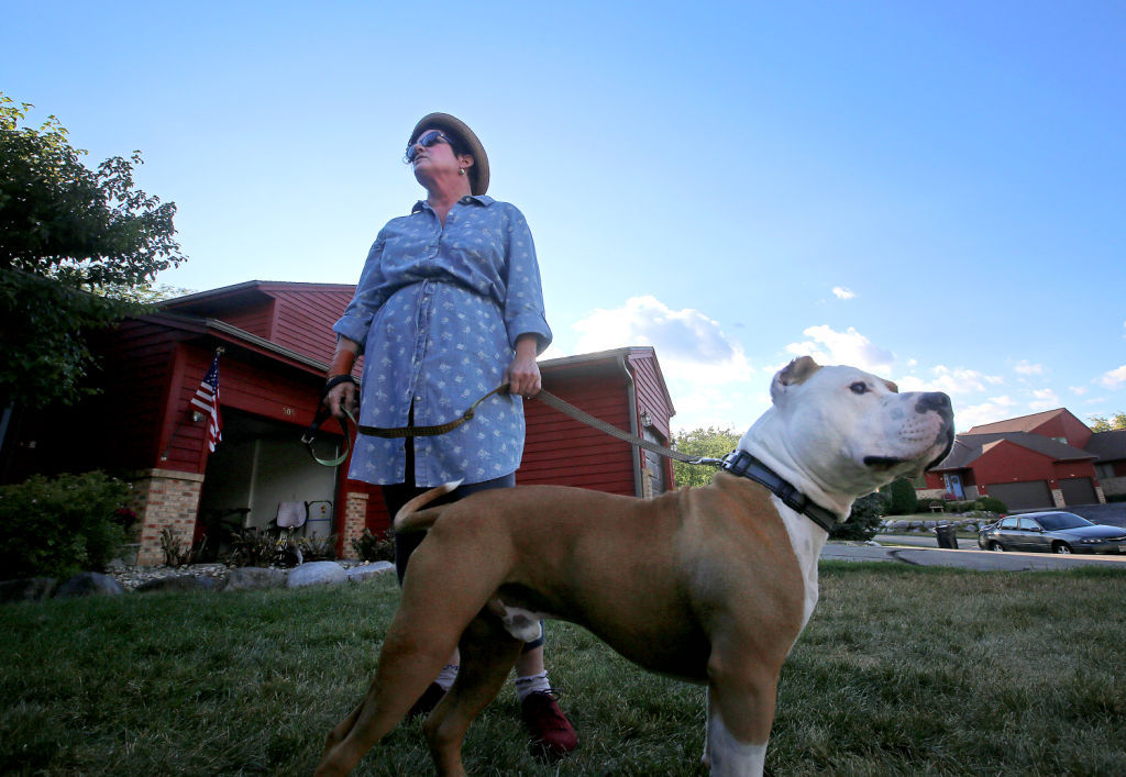In Cambridge, a pit bull named Sherlock triggers a rancorous ...