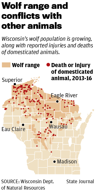 Wolf range and conflicts with other animals