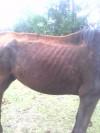 CIMG0727-11162011123403.jpg