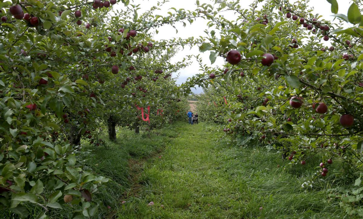 Photos A Fall Day At Door Creek Orchard Local News