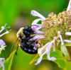 Chris Rickert: Get the weeds growing and the honey flowing: Stop mowing