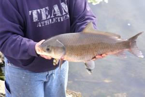 Nature 39 s way focus on bigmouth buffalo sports for Buffalo fish taste