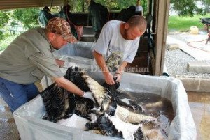 Gator prices on rise after down year