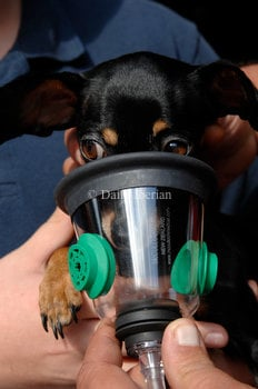 Pet emergencies: New mask to help  animal rescues