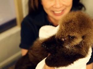 Baby otter takes dip at Chicago aquarium