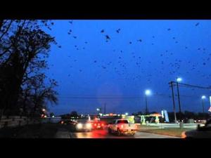 Murder of Crows in Caldwell