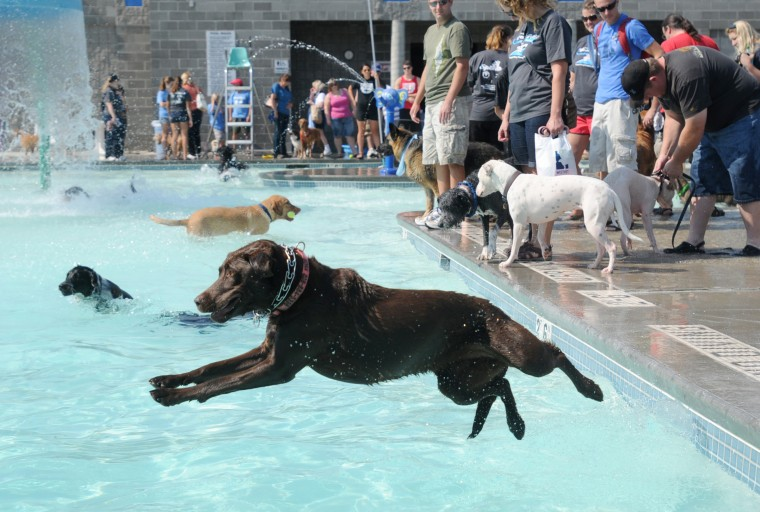 Nampa 39 S Pooch Party Stroll And Splash Photo Gallery