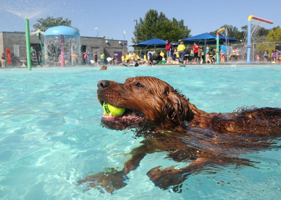 Pooch Pool Party Idaho Press Tribune Multimedia
