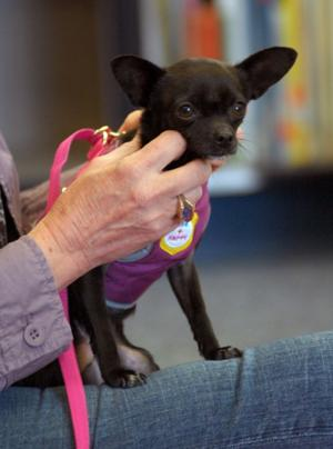 Marylin Therapy Dogs 2-23-12 0113