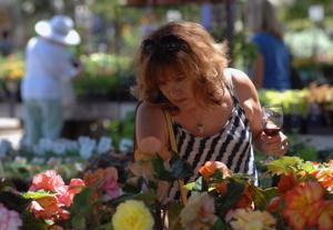 The Livermore Art Association's annual Art Under the Oaks was held last weekend at Alden Lane Nursery in Livermore. The event showcases local artists, musicians and winemakers. Local artists were on hand exhibiting and selling their work. Kathleen Hill paints during the event (Photos - Doug Jorgensen).