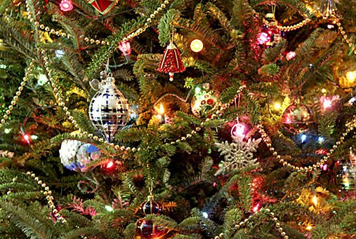 where to recycle your christmas tree headlines insidenovacom
