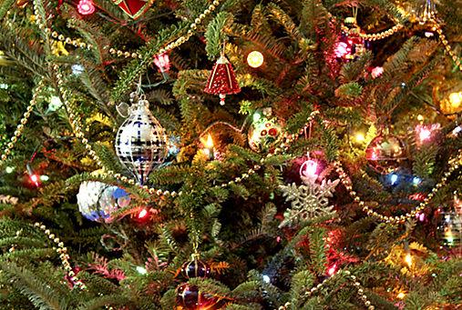 where to recycle your christmas tree headlines insidenovacom