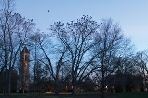 Crows on Campus