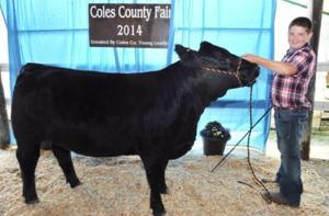 Ames, Ferguson, other 4-H'ers earn top honors at beef cattle show