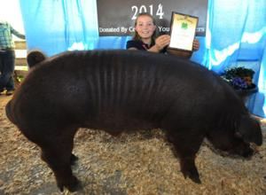 Pierson wins senior showmanship at swine show