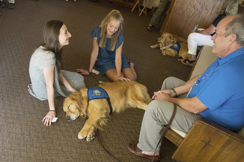 Lutheran Churches — And Their Comfort Dogs — Offer Support. Laptop With Displayport Car Donation Veterans. Travel Insurance Best Deals New Mexico Prc. How Do You Say Check In Spanish. Commercial Pest Control Supplies. At&t Alarm Monitoring Service. Oak Pointe Country Club Cancer Cure Discovered. Movers Delray Beach Fl Internet Cars Database. How To Measure Traffic To A Website