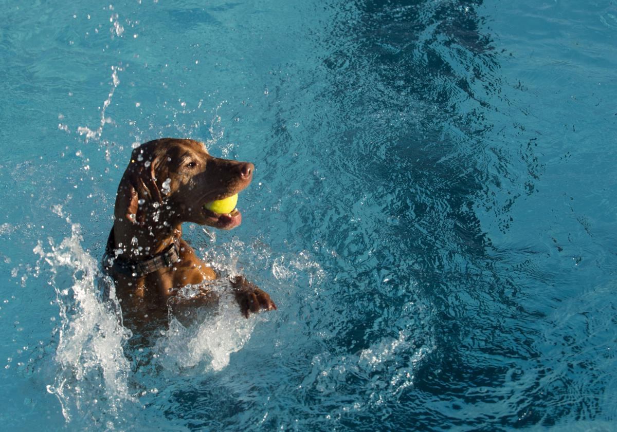 Photos Pool Goes To The Dogs Photo Galleries