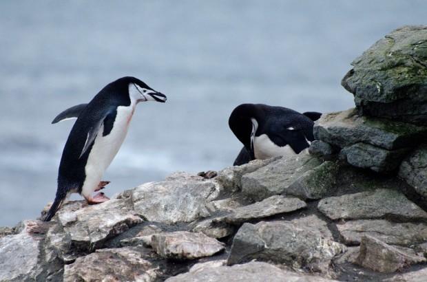 Gallery Antarctica S Animals L Mag