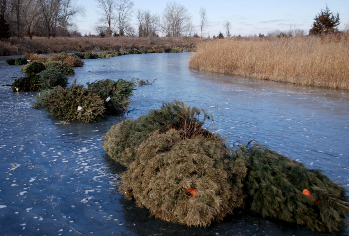 Old trees get new use as fish habitat nebraska news for Fishing ponds columbus ohio