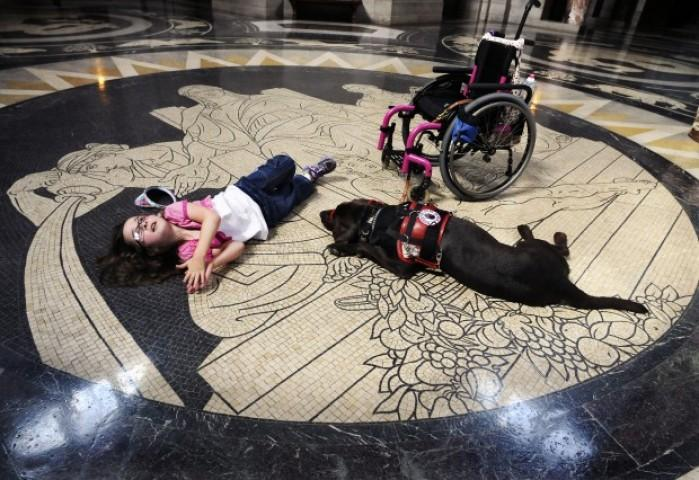 At Your Service Dogs Give Kids New Independence Local