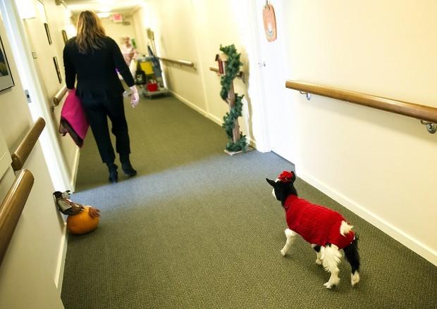 Gigi The Goat Brings Joy To Gateway Senior Living Center