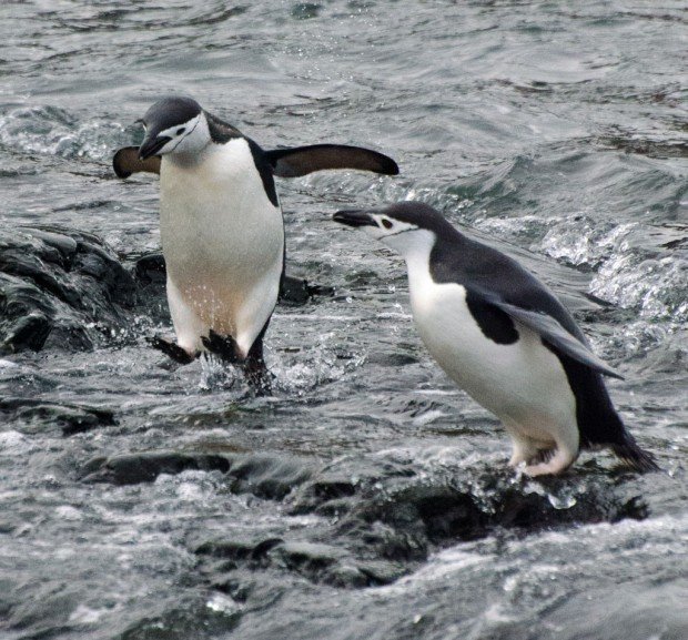 Gallery Antarctica S Animals L Mag