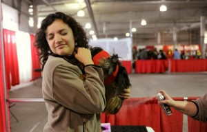 I Love My Dog Expo Gives Canines A Winter Outing