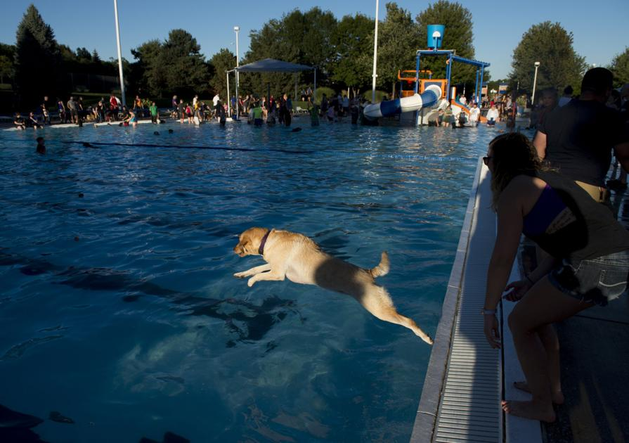 Puppy Pool Party Marks End Of Season For Star City Shores