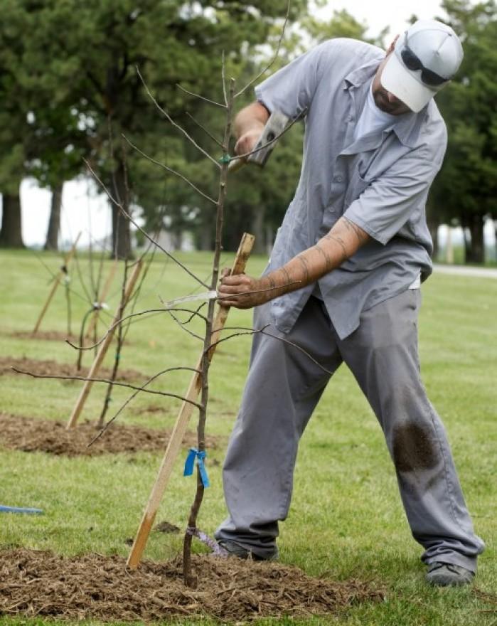 Inmate Plants Tree