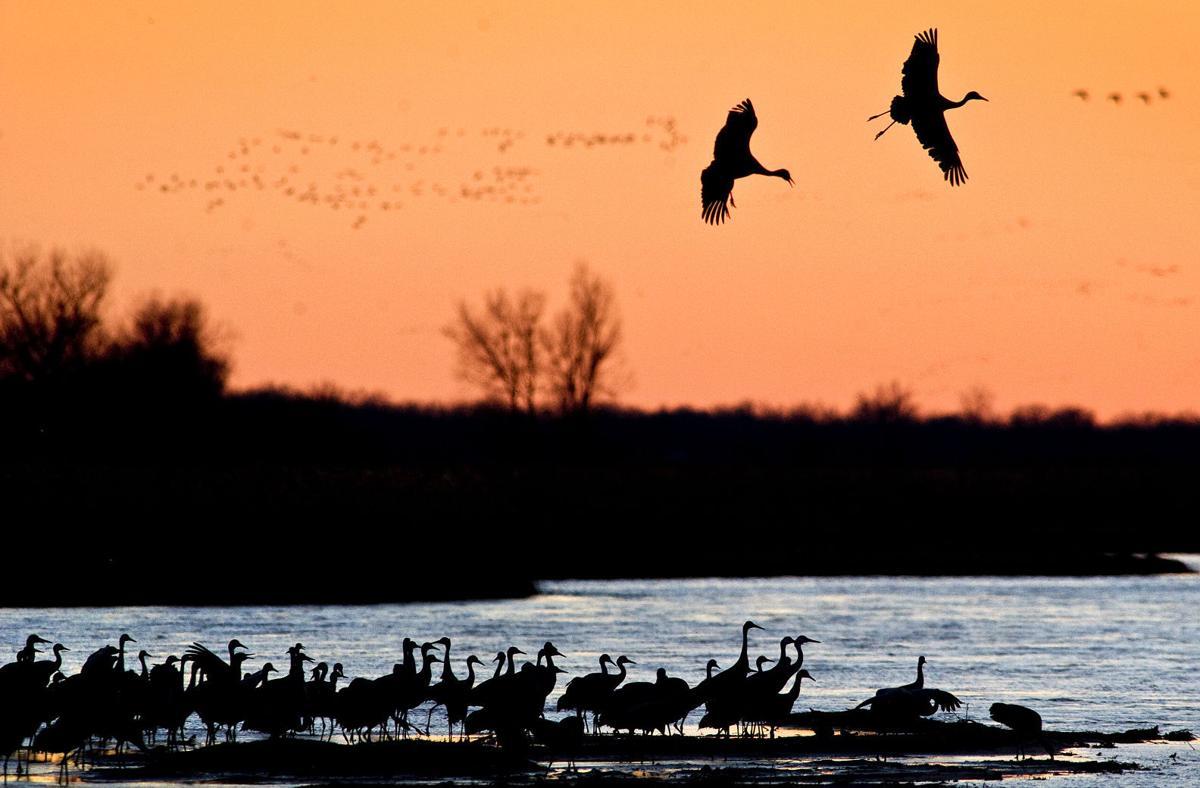 Audubon Center At Rowe Sanctuary Celebrates Conservation