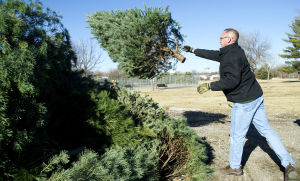 City will recycle trees