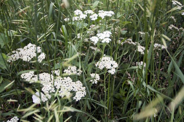 Wildflowers Lincoln Ne Journal Star