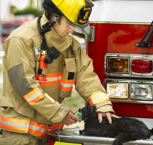 Photos Rescue Workers Tend To Cats After Fire Gallery