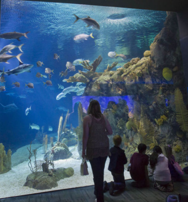 Highlights At The Henry Doorly Zoo Gallery