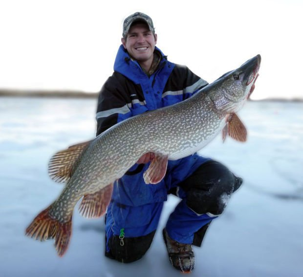 Monster northern pike caught released to be pursued again for Ice fishing nebraska