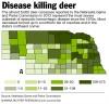Disease killing deer