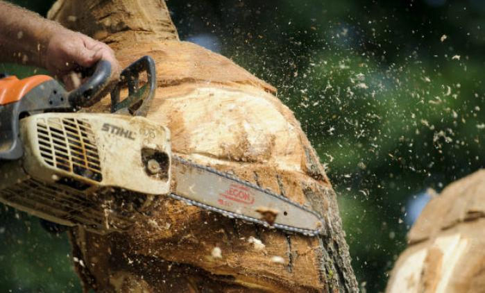 Tree carving local journalstar